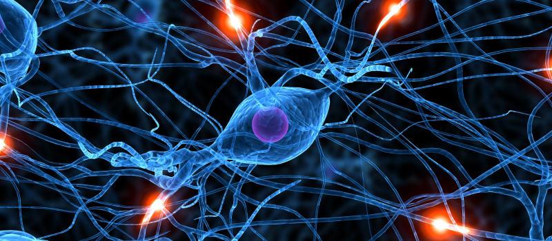 Nervesystemet deles i en sentral og en perifer del.