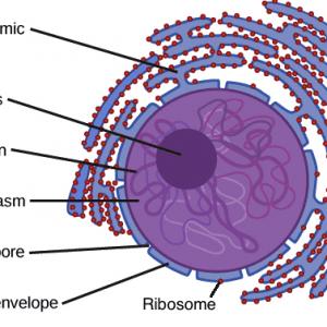 ribosomer