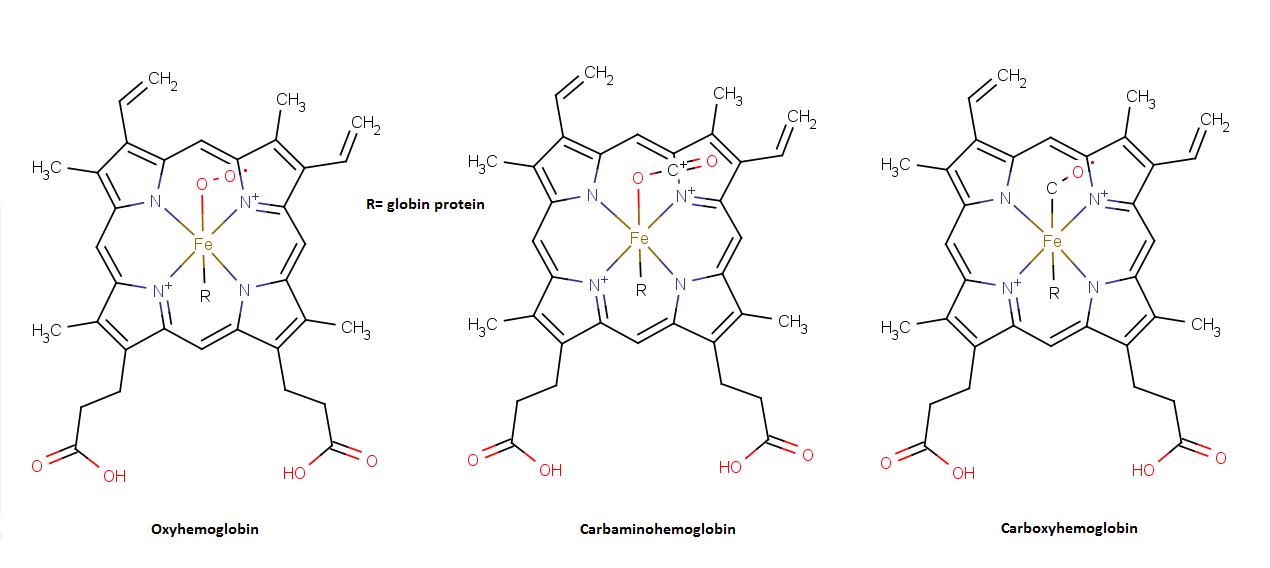 Hemoglobin - bilde fra wikipedia.org