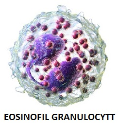 eosinofile granulocytter