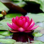De tre gunaene (yogaens historie, del 4)