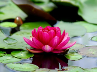 Alt i verden består av de tre gunaene rajas, tamas og sattva. I en yogapraksis ønsker vi å øke sattva i sinnet.