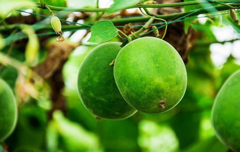 Munkfrukt S\u00f8tningsmiddel - Sukker uten negative helse ...